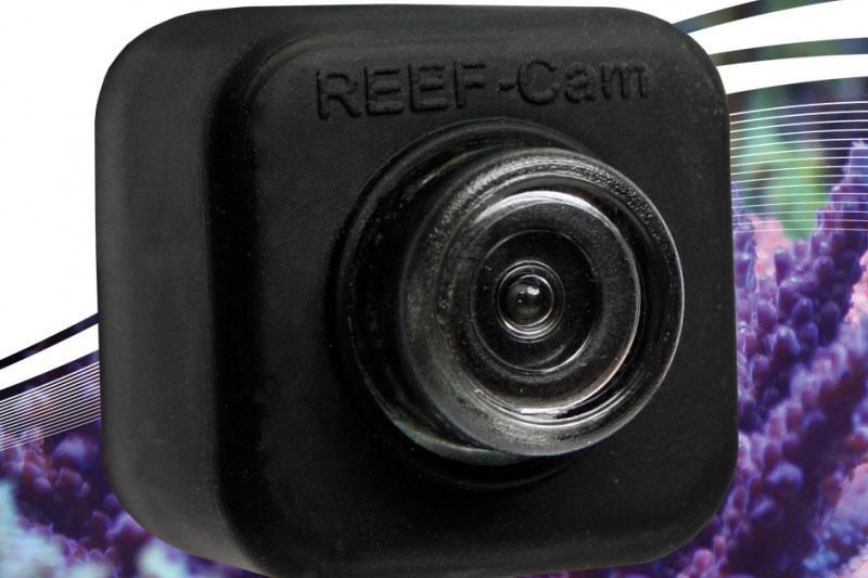 ice cap reef cam
