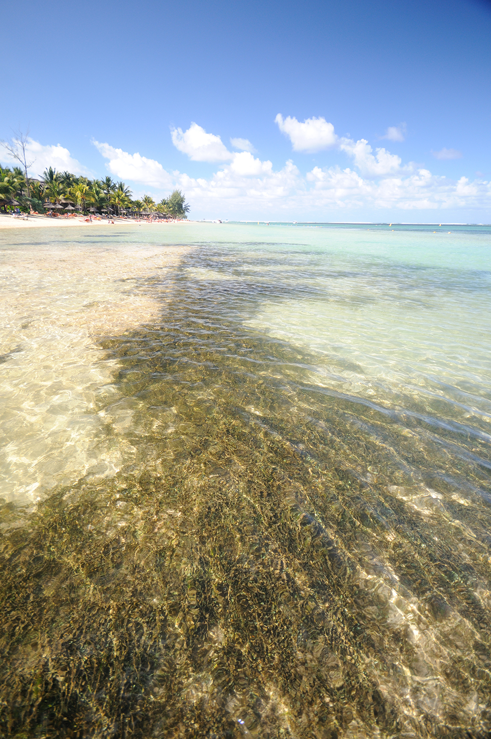 seagrass Indian Ocean