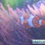 How to Clean Aquarium Glass