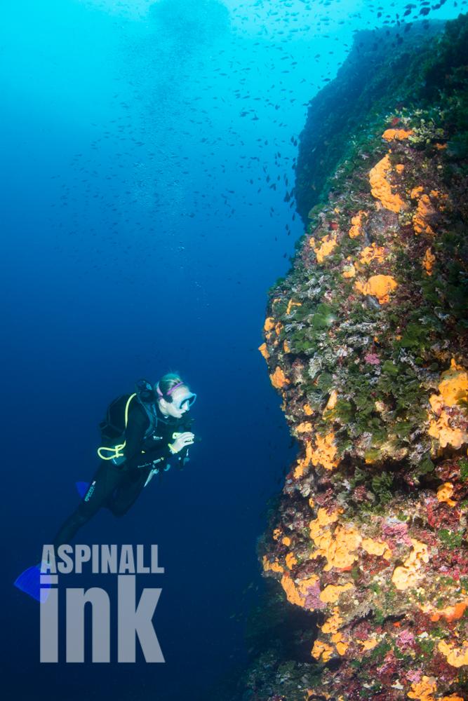 macroalgae, sponge, reef