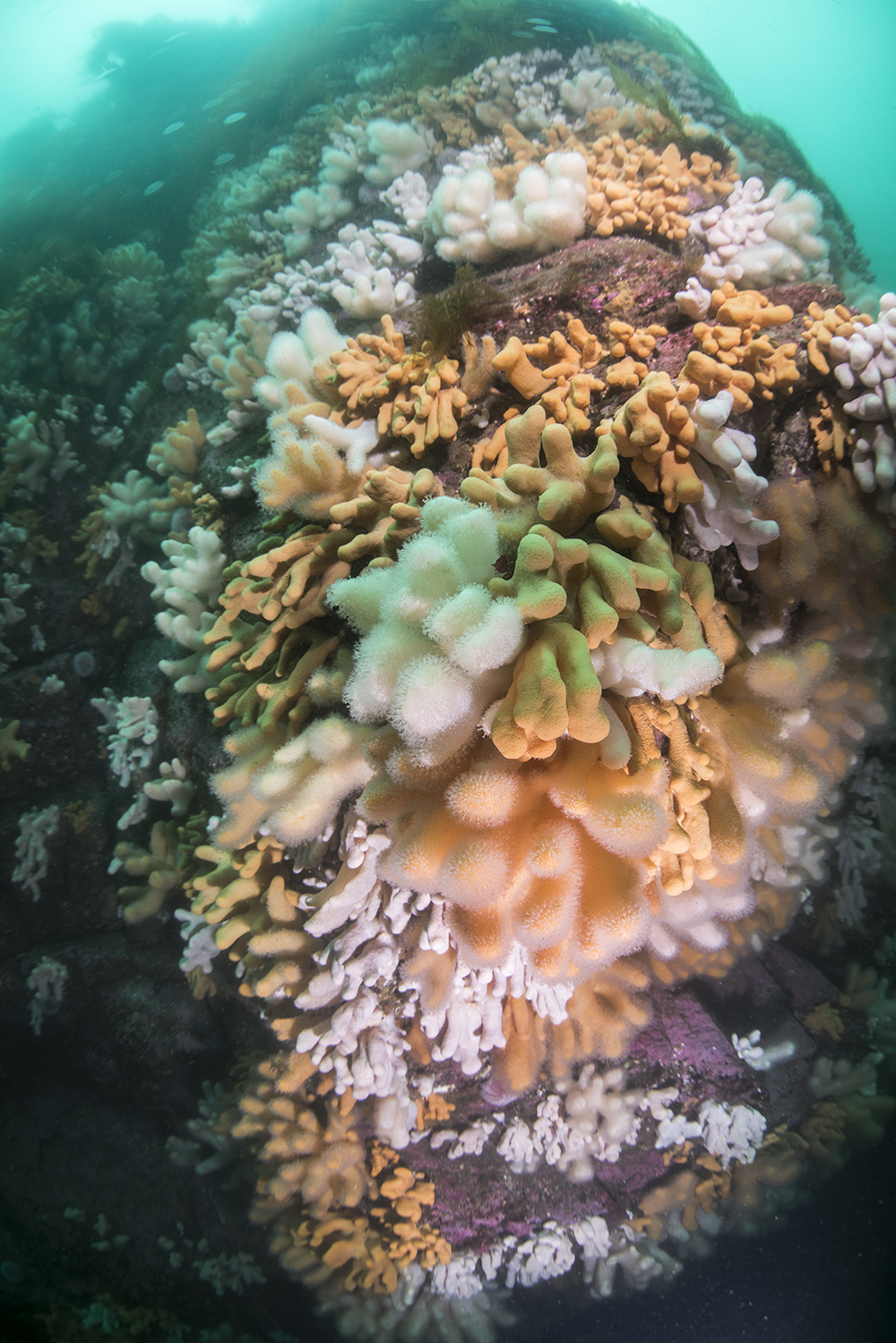 reef scene, coral