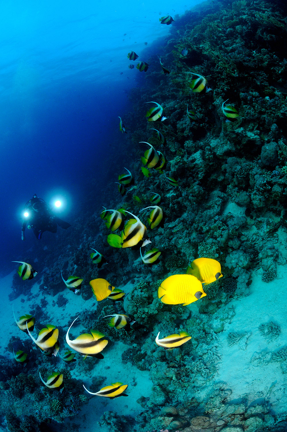 diver reef photography