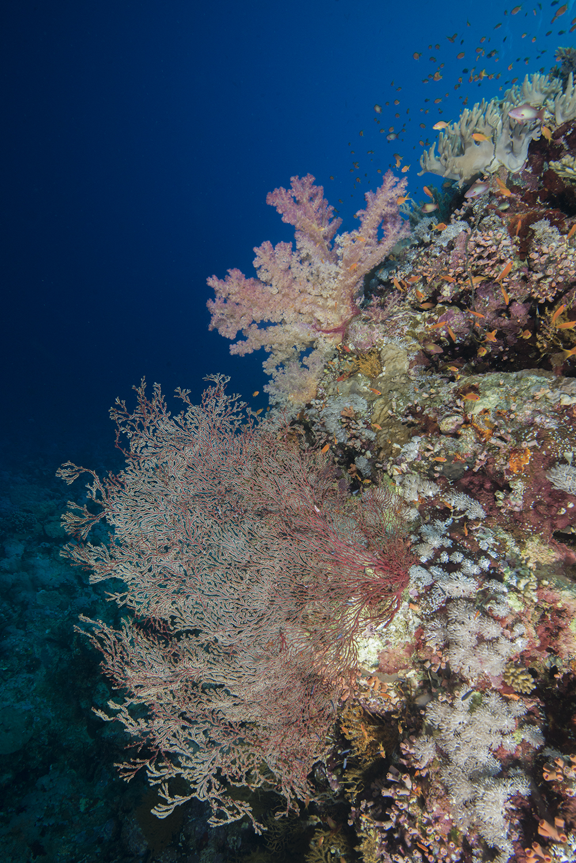 reef scene, coral, fish