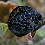 Fishy Stuff : Gem Tangs!