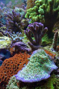 craig bingman coral