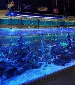 paradise aquatics