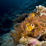 Red Anemones – Beautiful Animals in the Wild