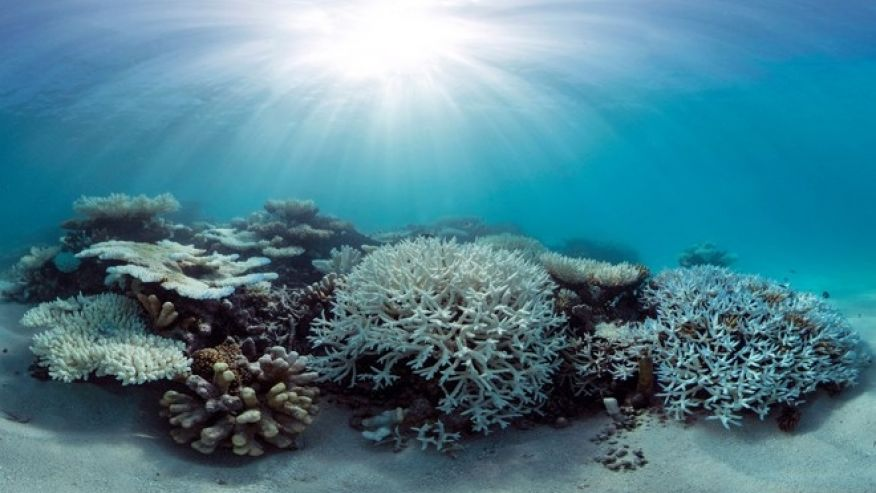 reef, corals