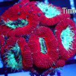 Aquarium Tips : Supplemental Coral Feeding?