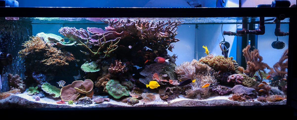 reefs day debacle - photo #28