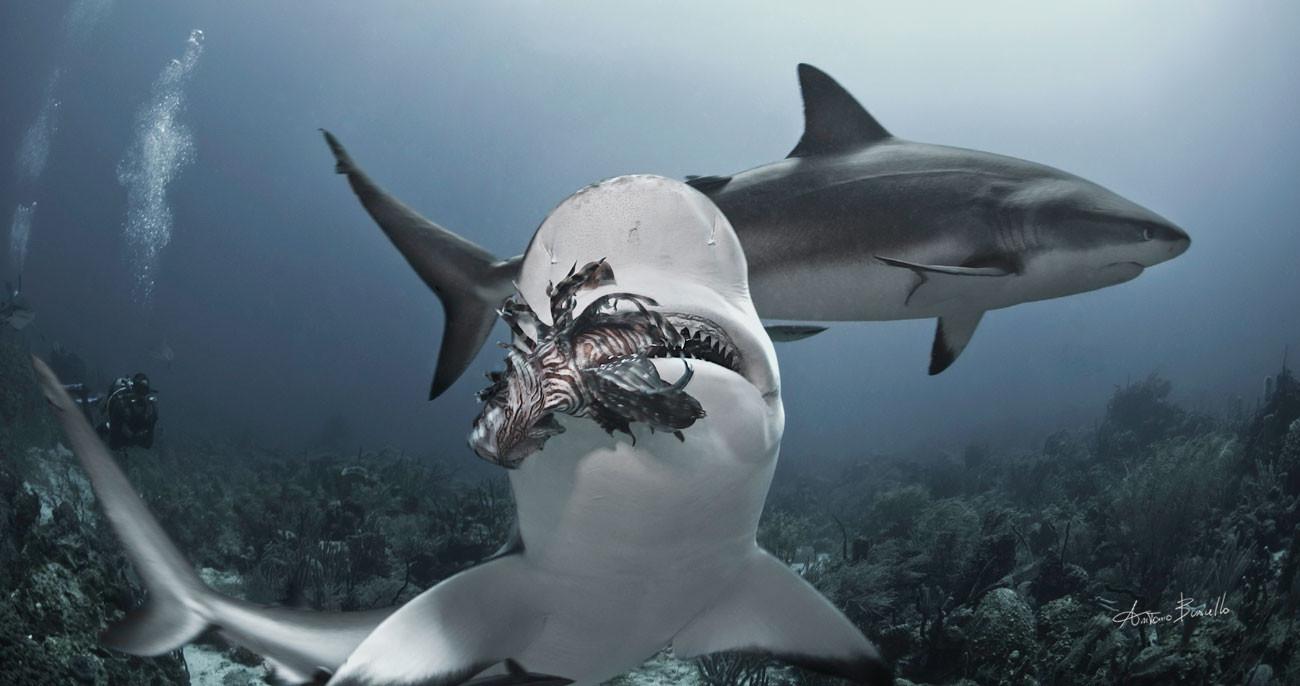 shark, lionfish
