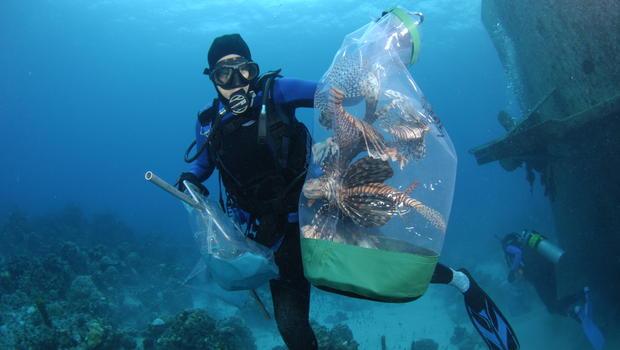 diver, lionfish