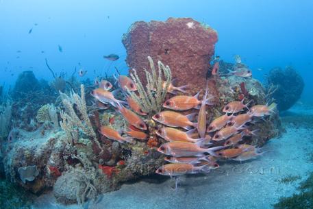 squirrelfish, sponge