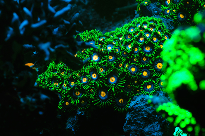 coral reef light penetration