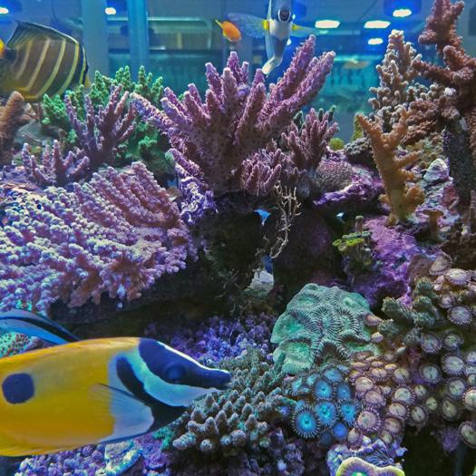 LFS Spotlight: Fintastic in Raleigh/Durham, NC | Reefs.com