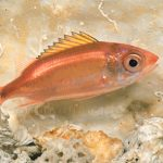 squirrelfish