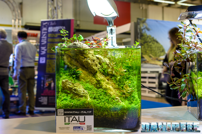 201705 acquario acqua dolce, aquascaping, itau, layout, zoomark 17 Copyright by DaniReef