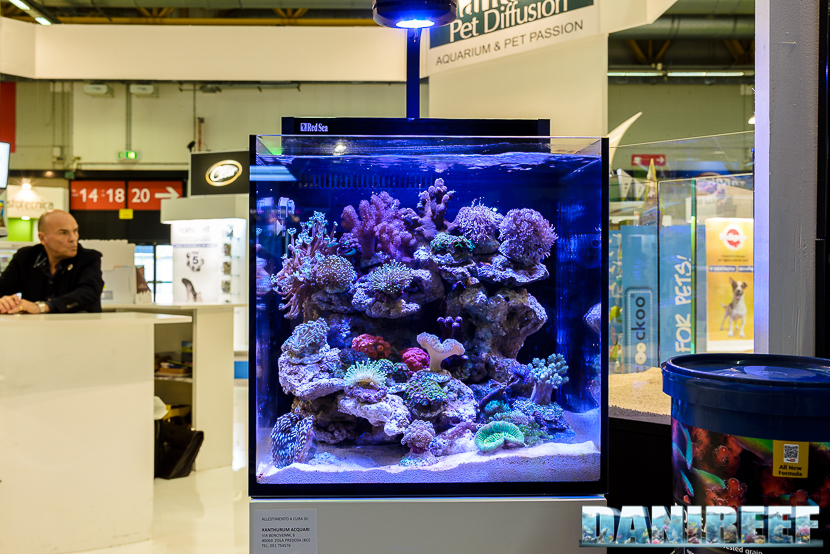 201705 acquario marino, layout, mantovani pet diffusion, Red sea, zoomark 122 Copyright by DaniReef