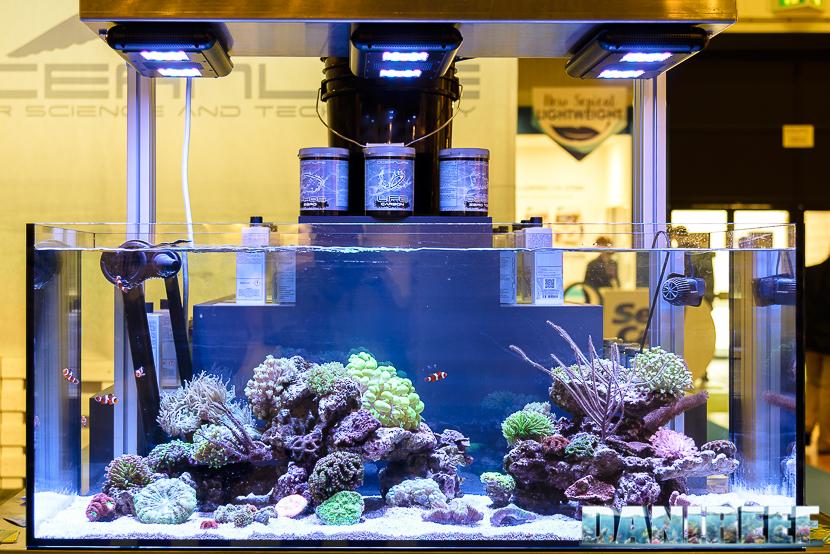 oceanlife reef tank