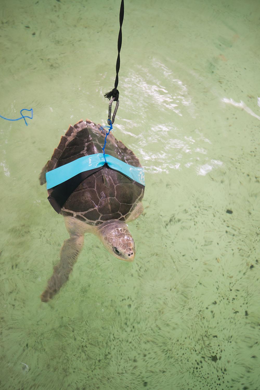 turtle ocean waste fishing gear