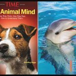 time magazine dolphin