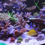 rico reef tank