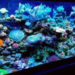 reef tank patrick thomas