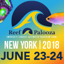 Reefapalooza-125