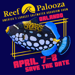 Reefapalooza-250