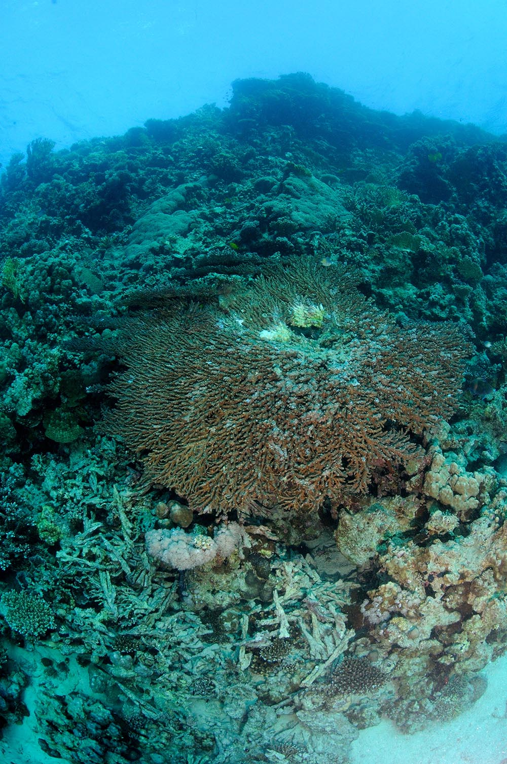 coral reef rubble