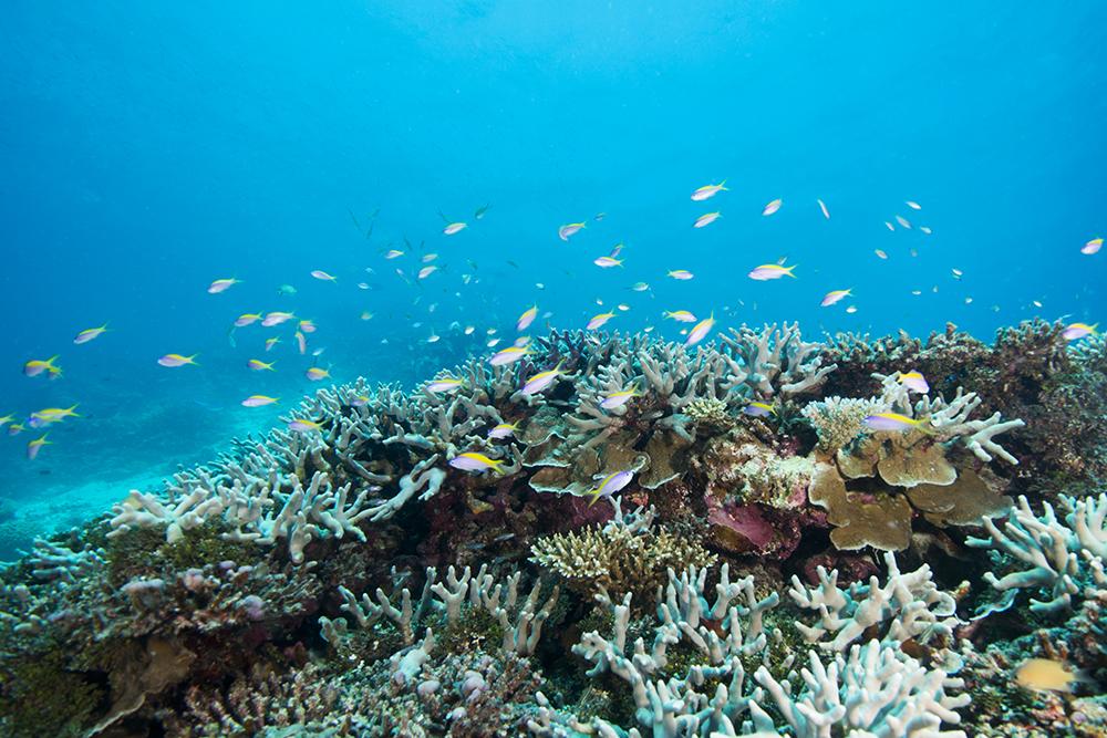 reef coral fish