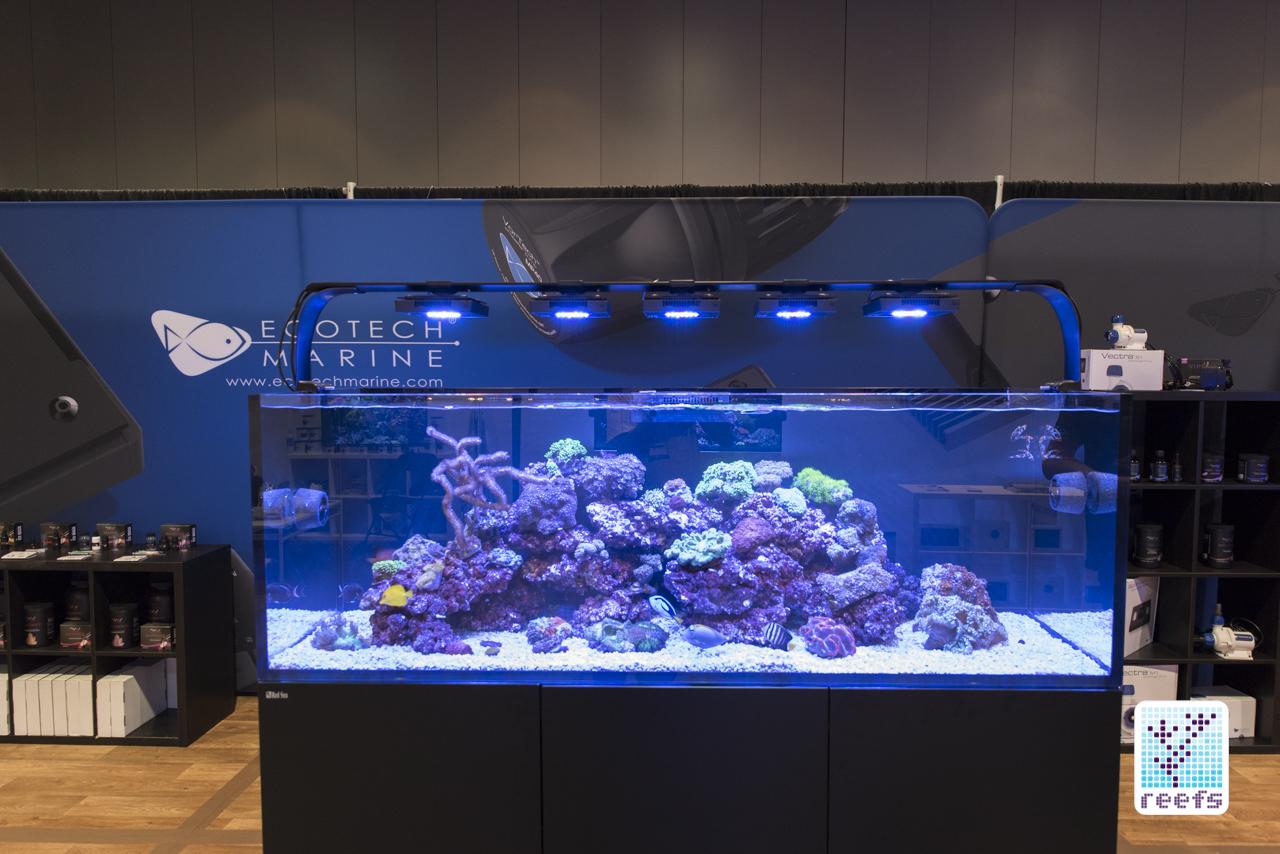 Ecotech reef tank