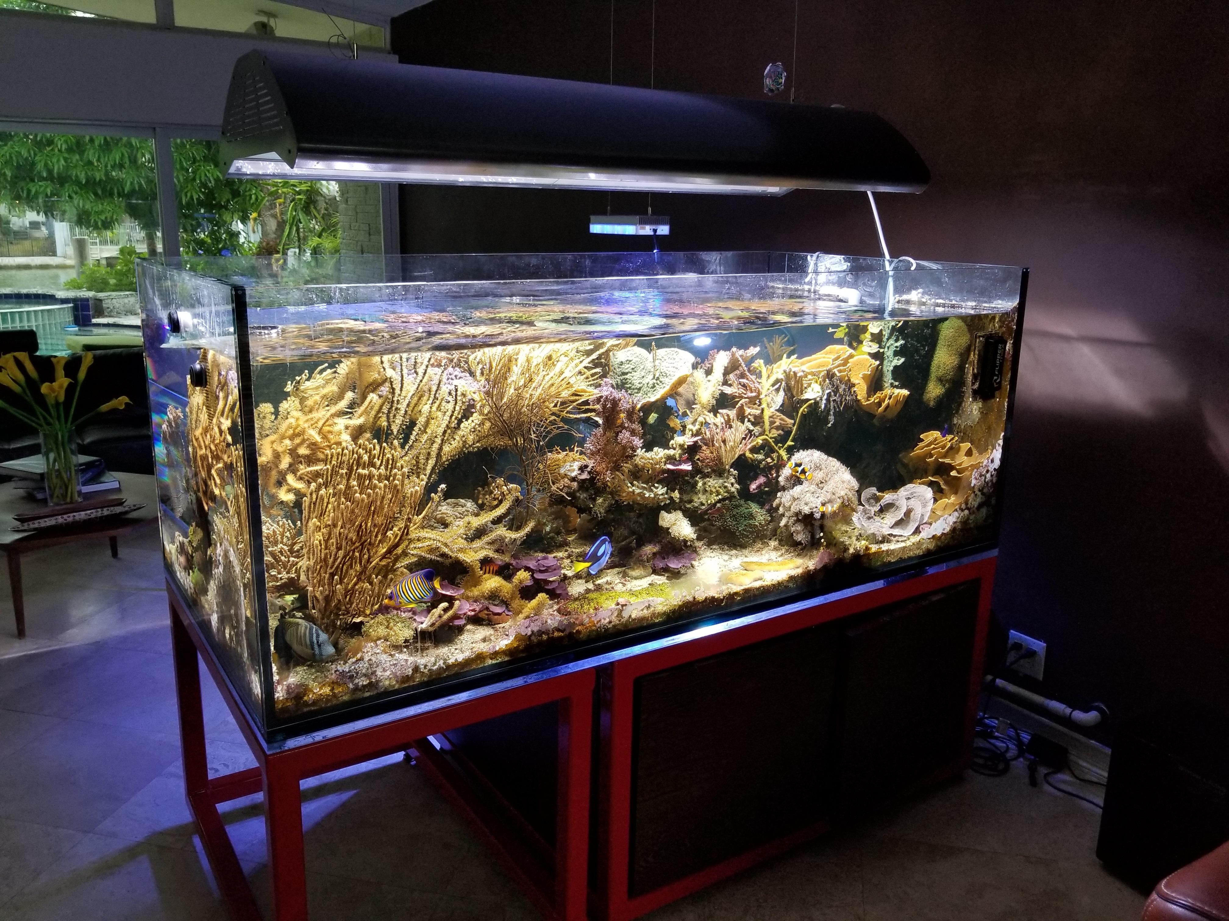 Reefs Com Tank Feature Julian Sprung S 250g Peninsula