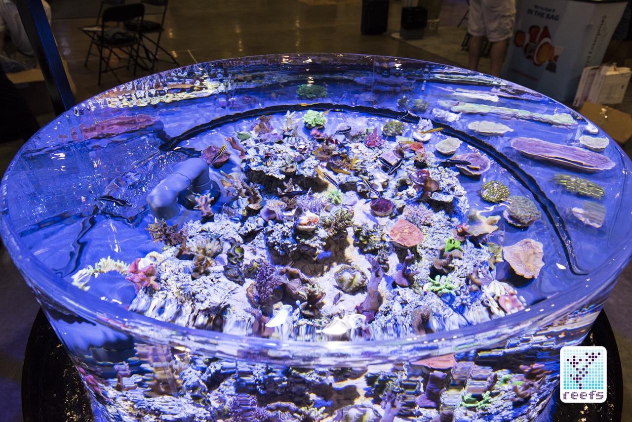 ORA reef tank
