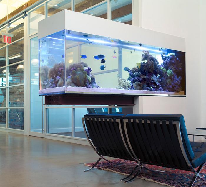 BDG-Cantilever-Reef-Aquarium