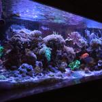 tidal gardens reef tank