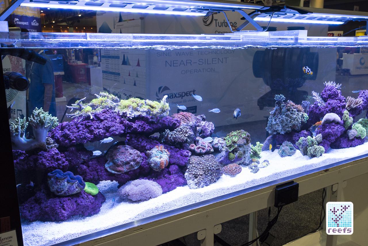 Maxspect reef tank