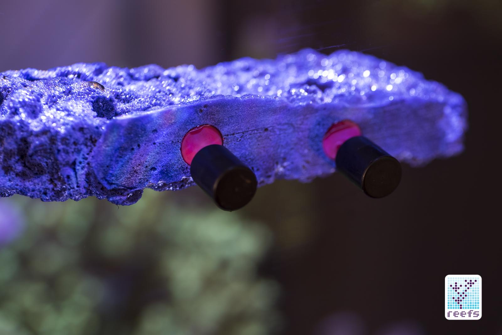 reef rax frag rack