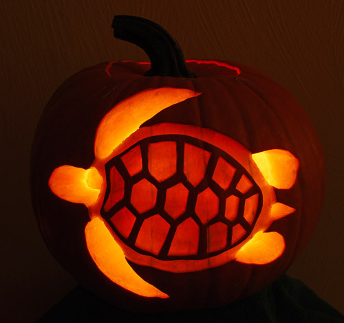 pumpkin sea turtle