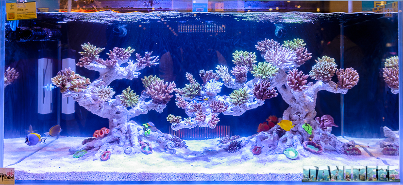 Marine Aquascaping The Contest At Cips 2017 Reefs Com