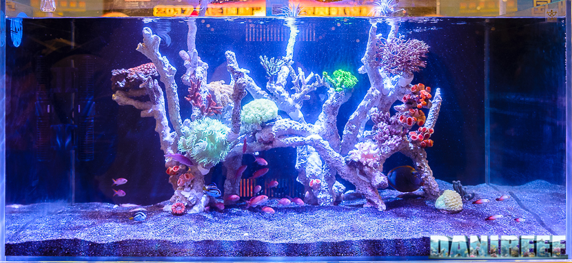 Along With The Freshwater Aquascaping Competition, CIPS 2017 Held A Contest  For Marine Aquarium Creators, That We Have Decided To Call MarineScaping.