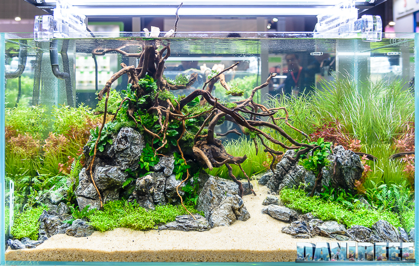 Due To The Difficulty To Report Them Correctly, We Associated The  Competitoru0027s Picture With His Own Aquascaping. Theyu0027re In Order Of  Photograph.