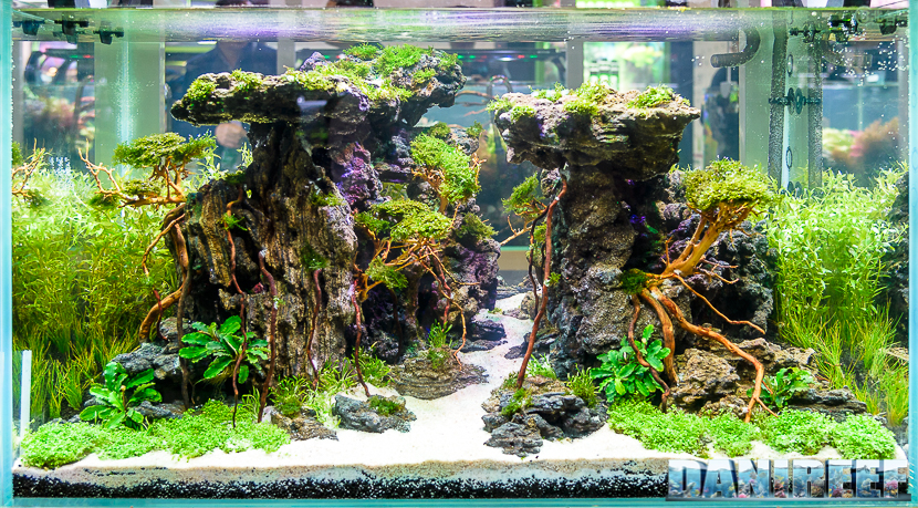 I Know, There Are A Lot Of Pictures Of The Aquascapes! But How Could We  Exclude Any Of Them? Which One Do You Like The Most?