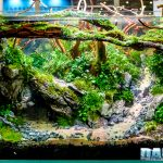 CIPS 2017: I'm sure you've never seen Aquascaping like this
