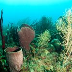 Sponges are Confirmed as the Oldest Animal Phylum