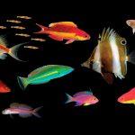 Top Ten New Fish Species From 2017