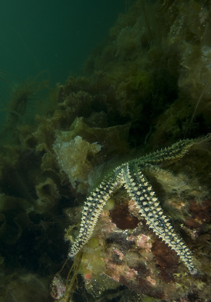 starfish, sea loch