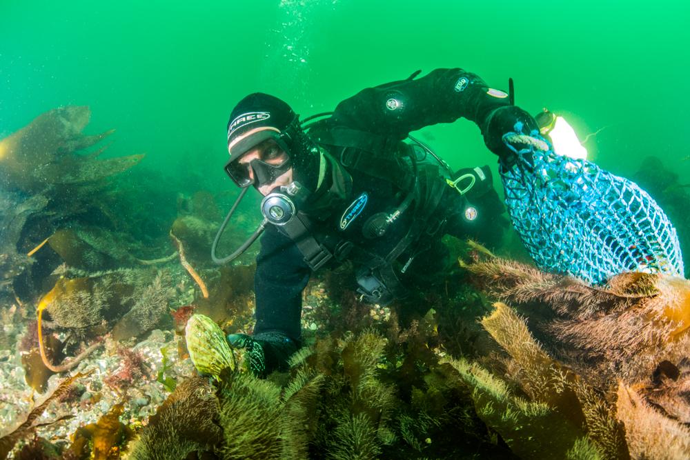 diver, clam harvest
