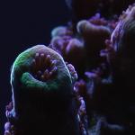 coral macro shot