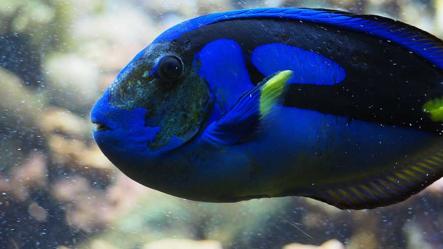 9 things to look for to be sure you re buying a healthy fish reefs com